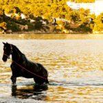 Heiraten Mallorca